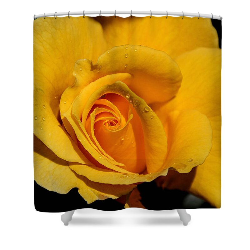 Yellow Rose Shower Curtain featuring the photograph Yellow Rose by Mary Ourada