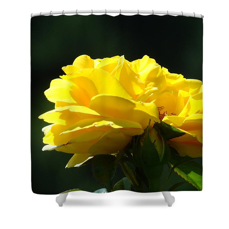 Rose Shower Curtain featuring the photograph Yellow Rose Sunlit Rose Garden Landscape Art Baslee Troutman by Baslee Troutman