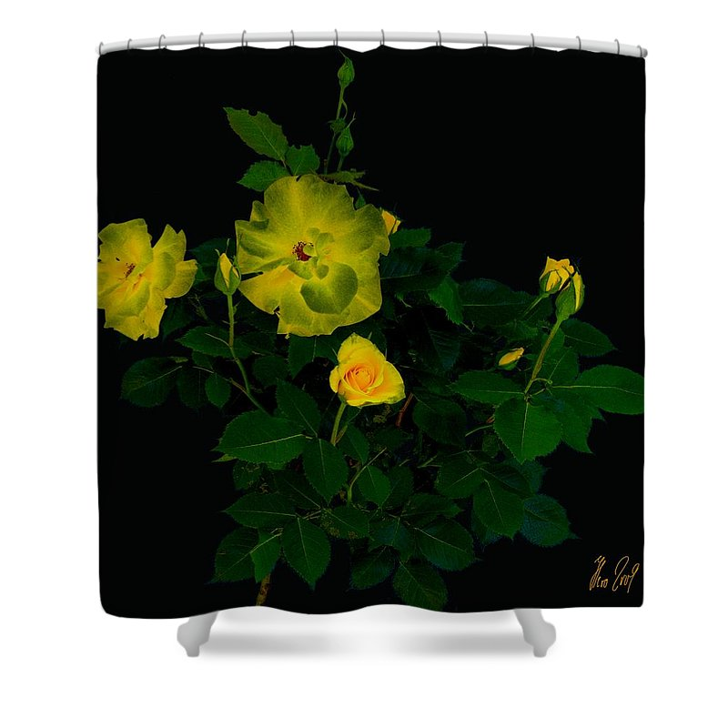 Rose Shower Curtain featuring the photograph Yellow Roses by Helmut Rottler