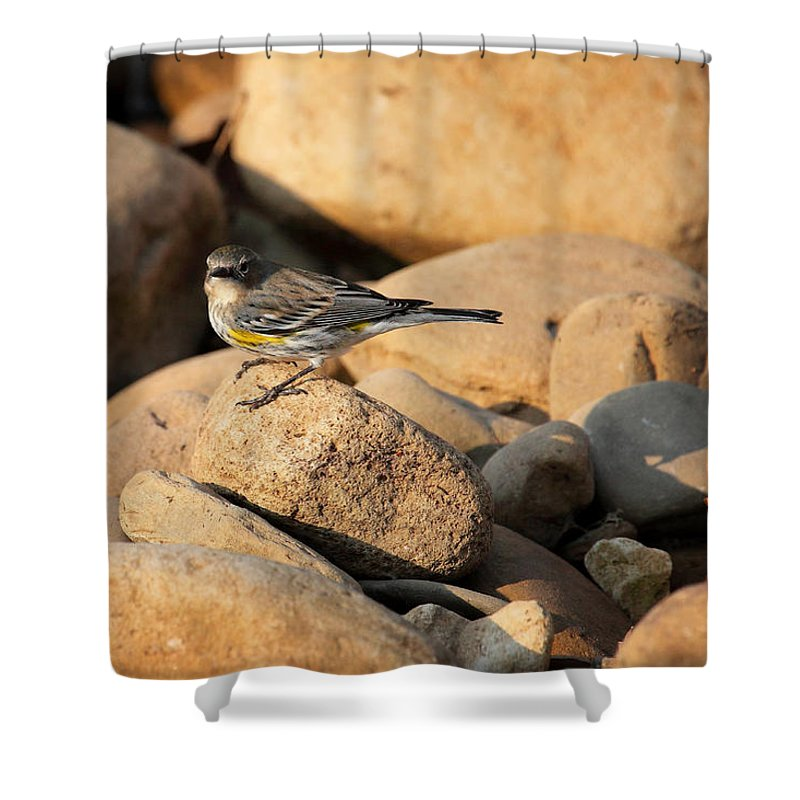 Yellow-rumped Warbler Shower Curtain featuring the photograph Yellow Rumped Warbler On River Rocks by Michael Dougherty