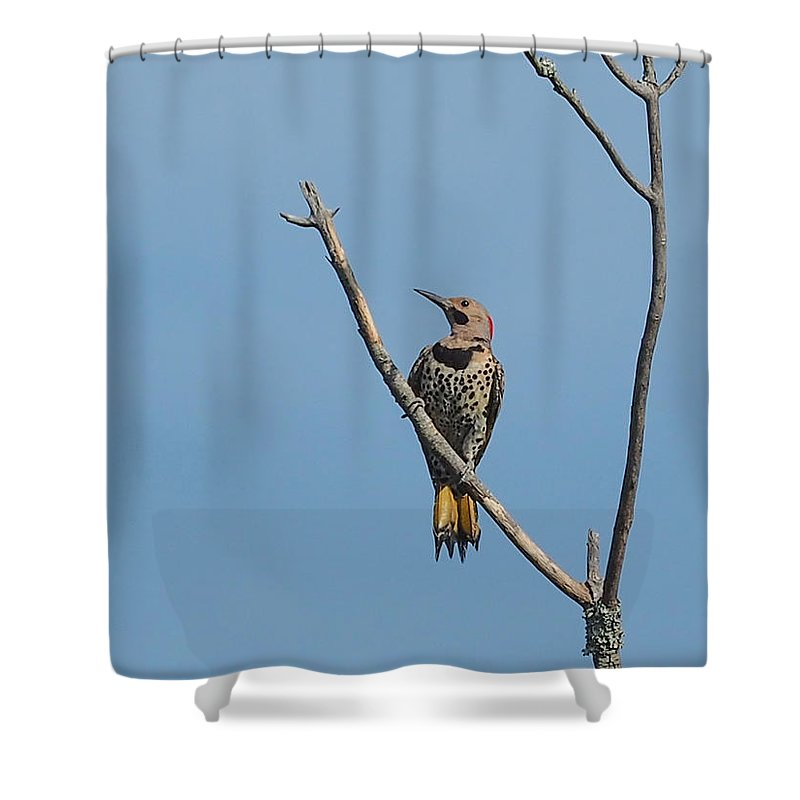Wildlife Shower Curtain featuring the photograph Yellow Shafted Flicker Front by Paula Ponath