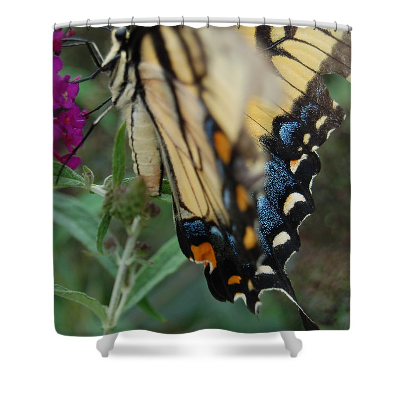 Butterfly. Yellow Shower Curtain featuring the photograph Yellow Swallow by Robert Meanor