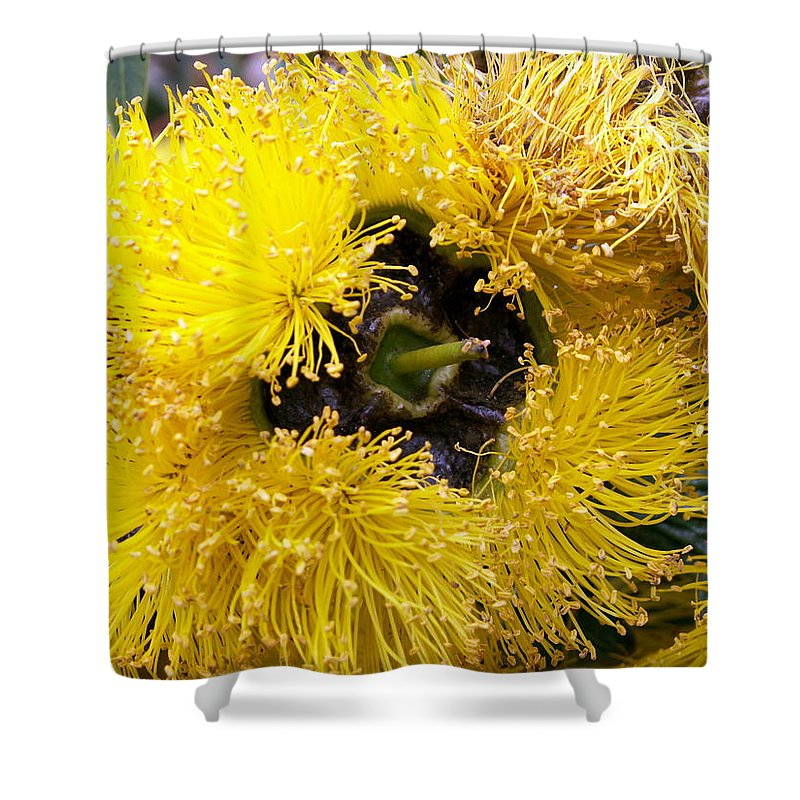 Flower Shower Curtain featuring the photograph Yellow Tree Flower by Amy Fose