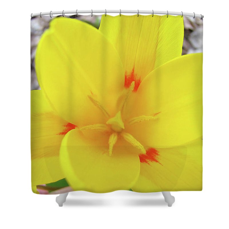 �tulips Artwork� Shower Curtain featuring the photograph Yellow Tulip Flower Spring Flowers Floral Art Prints by Baslee Troutman