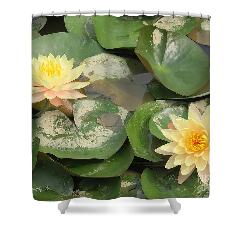 Flowers Shower Curtain featuring the photograph Yellow Water Lillies by Mikhael van Aken
