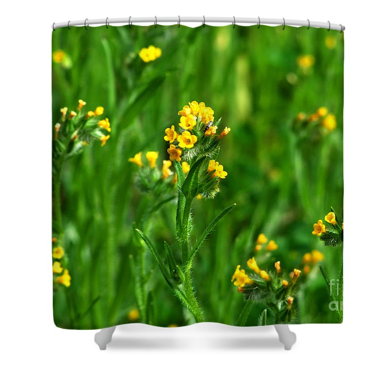 Artoffoxvox Shower Curtain featuring the photograph Yellow Wildflower Photograph by Kristen Fox