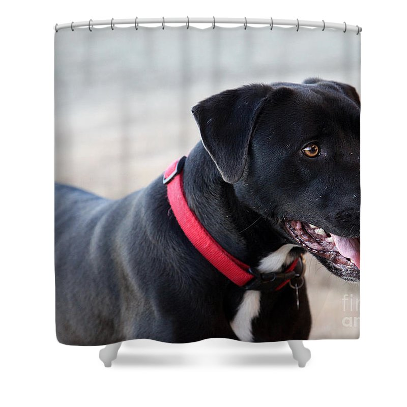 Dogs Shower Curtain featuring the photograph Yes I Want To Play by Amanda Barcon
