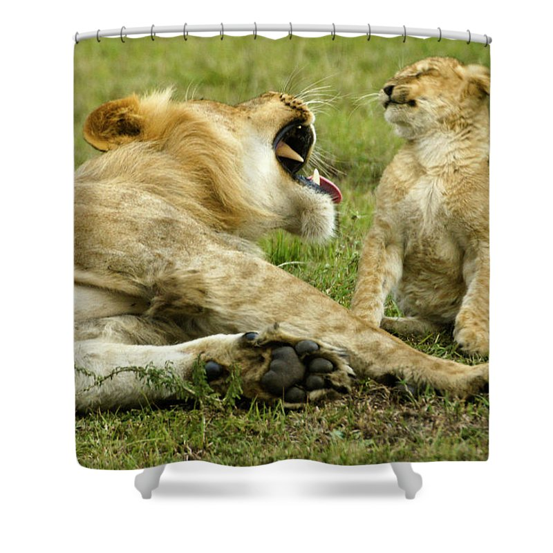Africa Shower Curtain featuring the photograph Yikes by Michele Burgess