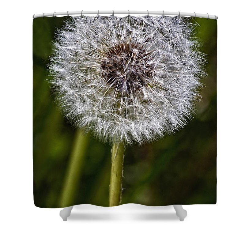 Floral Shower Curtain featuring the photograph Yippee by Steve Harrington