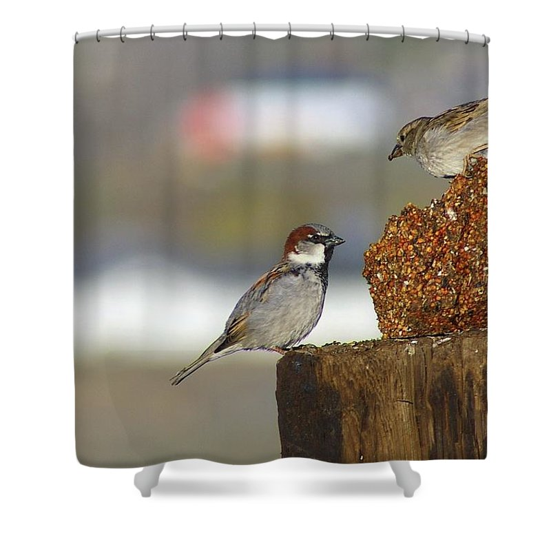 Birds Shower Curtain featuring the photograph Yippie by Jeff Swan