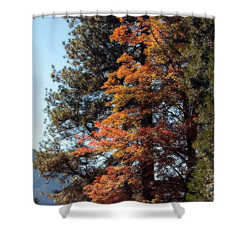 Yosemite Shower Curtain featuring the photograph Yosemite Fall Color by Joanne Coyle