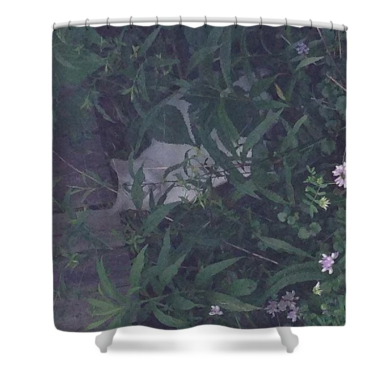 Shower Curtain featuring the photograph You Can't See Me by Avery McCullough