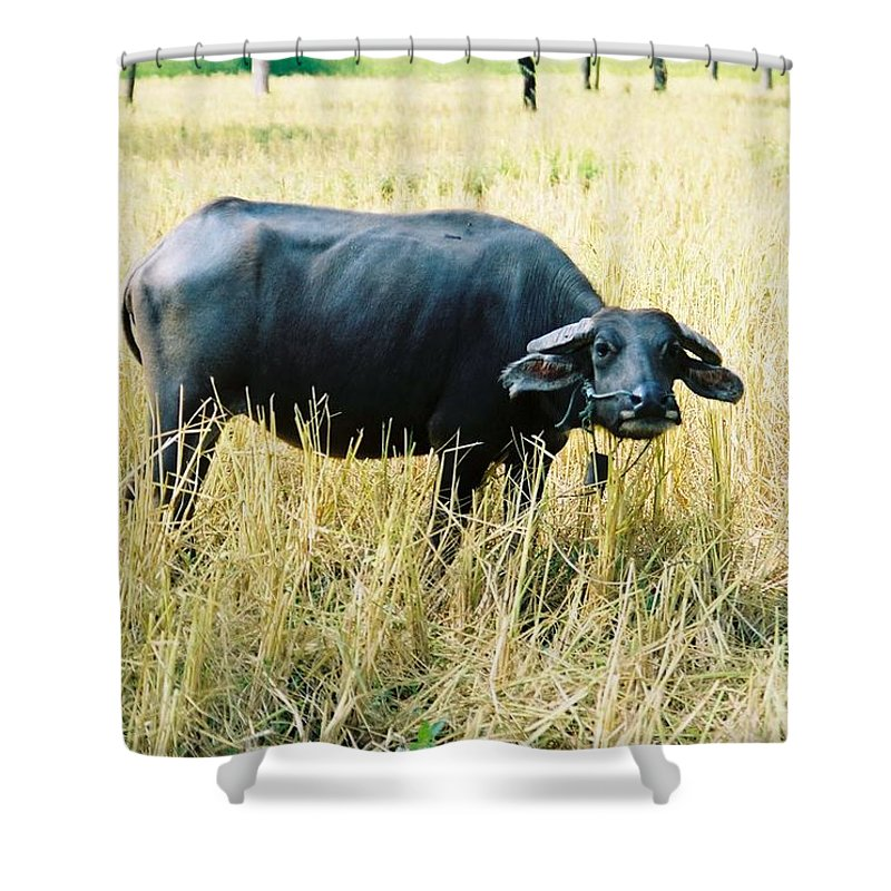 Water Buffalo Shower Curtain featuring the photograph You Lookin At Me by Mary Rogers