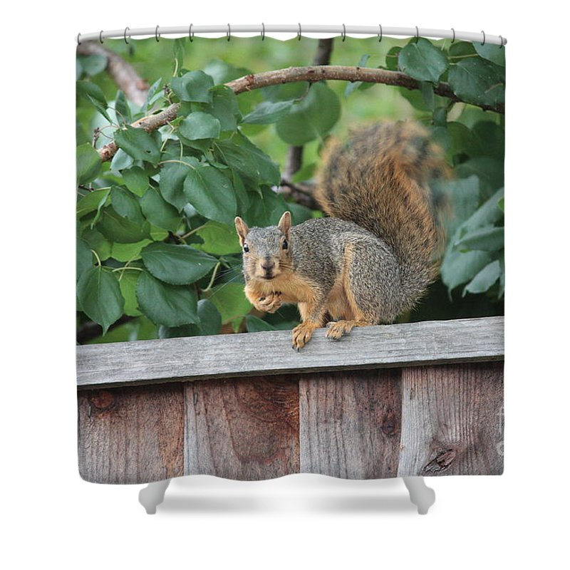 Animals Shower Curtain featuring the photograph You Looking At Me by Carol Groenen