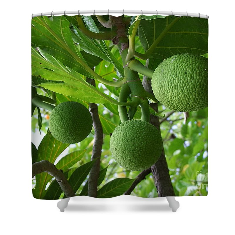 Breadfruit Shower Curtain featuring the photograph Young Breadfruit by Mary Deal