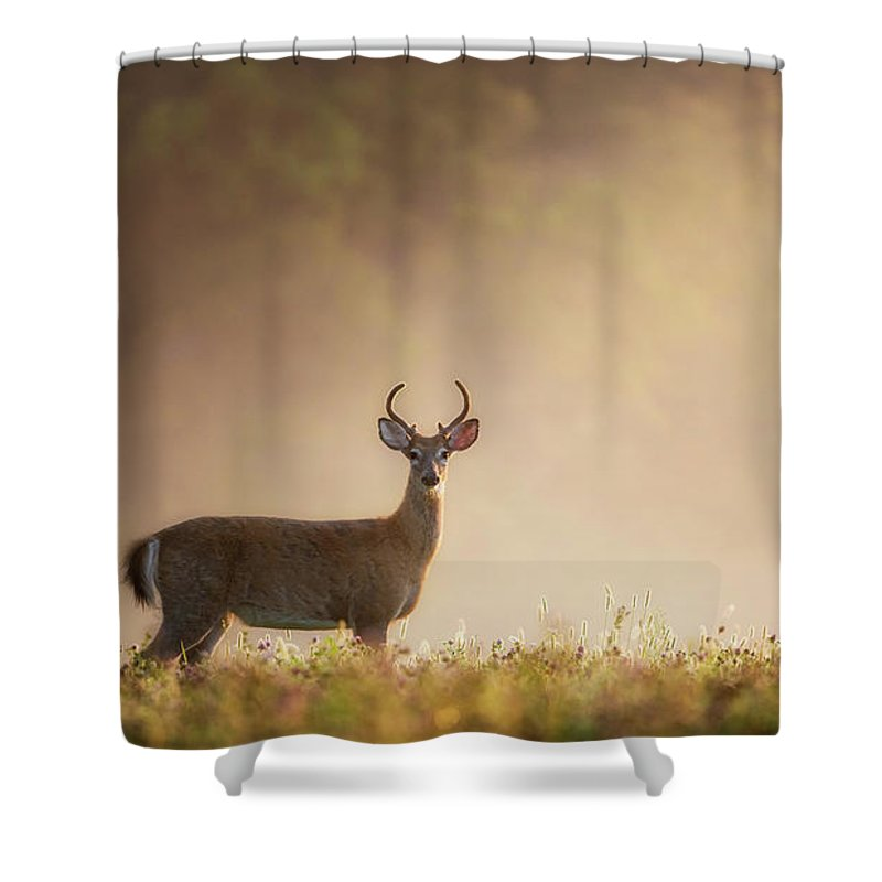 Buck Shower Curtain featuring the photograph Young Buck by Bill Wakeley