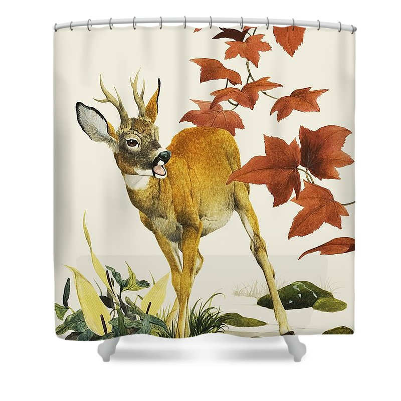 Fallow Deer Shower Curtain featuring the painting Young Fallow Deer by English School