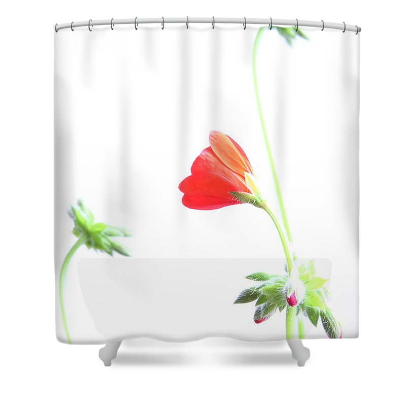 Geranium Shower Curtain featuring the photograph Young Geranium Fine Art Photography Print by James BO Insogna