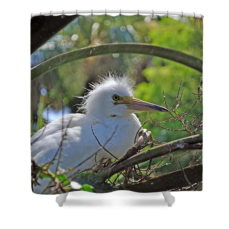 Egret Shower Curtain featuring the photograph Young Great Egret by Kenneth Albin