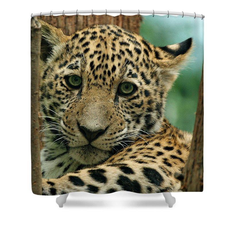 Jaguar Shower Curtain featuring the photograph Young Jaguar by Sandy Keeton