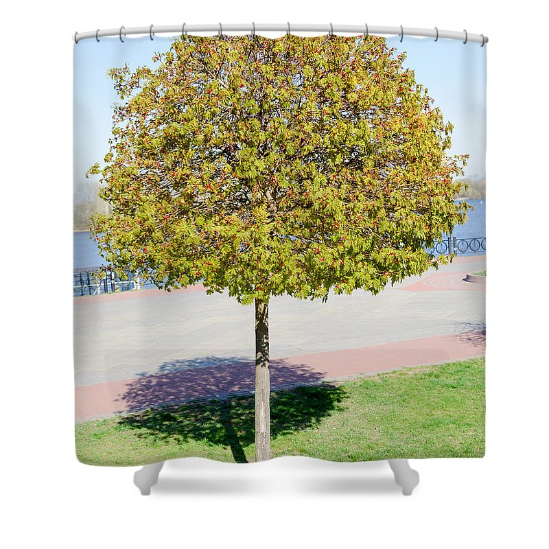 Blossom Shower Curtain featuring the photograph Young Maple Tree by Alain De Maximy