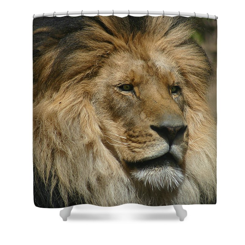 Lion Shower Curtain featuring the photograph Your Majesty by Anthony Jones
