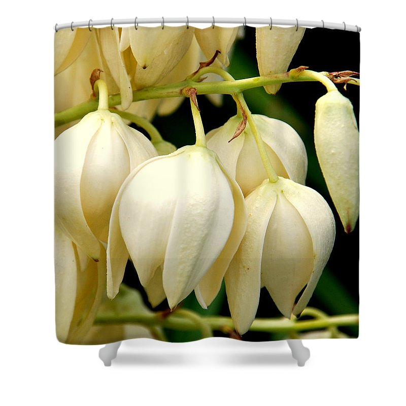 Yuca Shower Curtain featuring the photograph Yucca Flower by Susanne Van Hulst