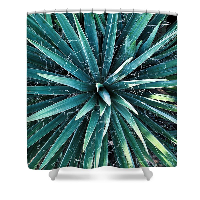 Yucca Shower Curtain featuring the photograph Yucca Plant Detail by Douglas Barnett