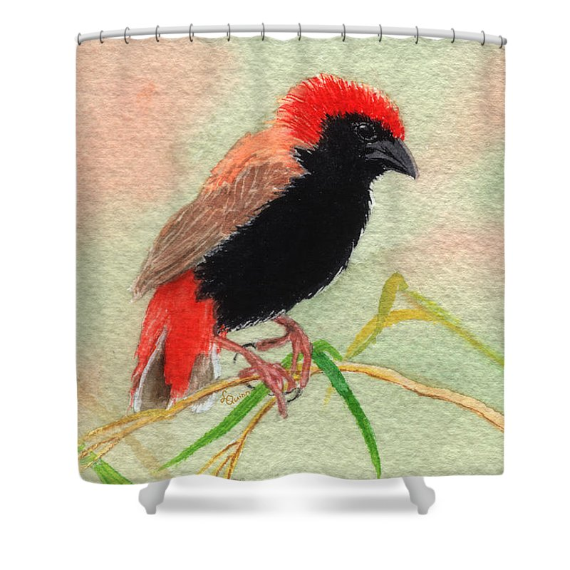Bird Shower Curtain featuring the painting Zanzibar Red Bishop by Lynn Quinn