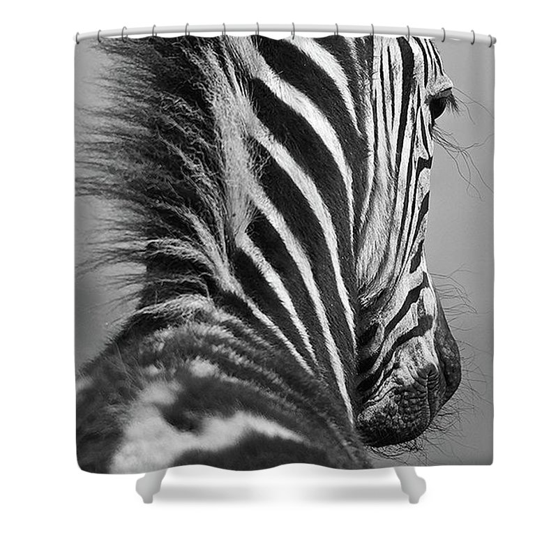 Zebra Shower Curtain featuring the photograph Zebra Baby by Suzanne Morshead