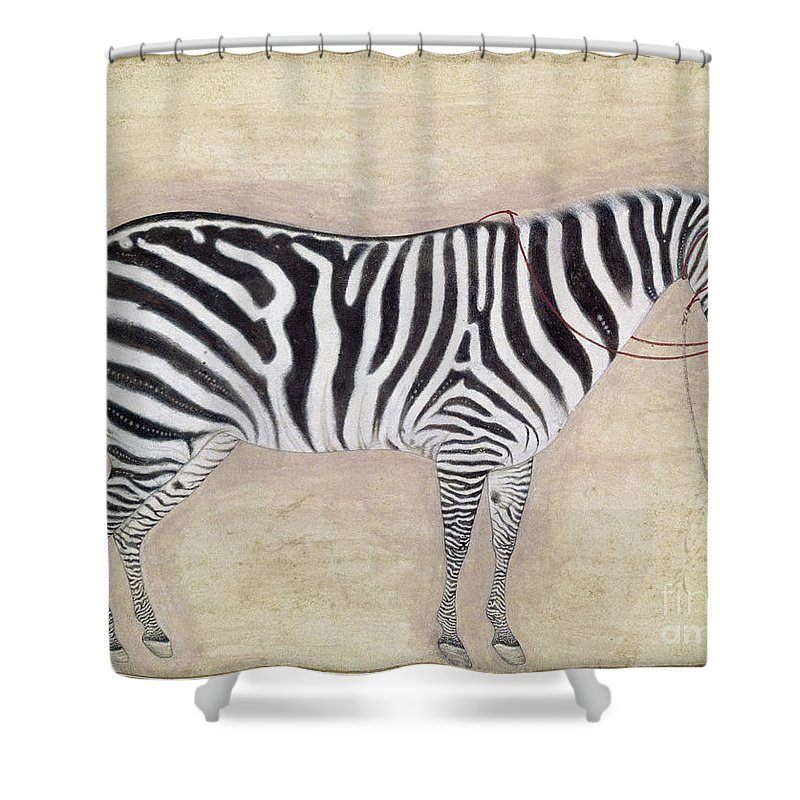 1620 Shower Curtain featuring the photograph Zebra, C1620 by Granger