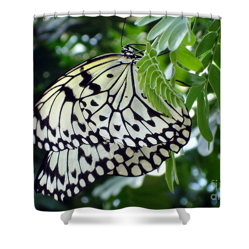 Butterfly Shower Curtain featuring the photograph Zebra In Disguise by Shelley Jones