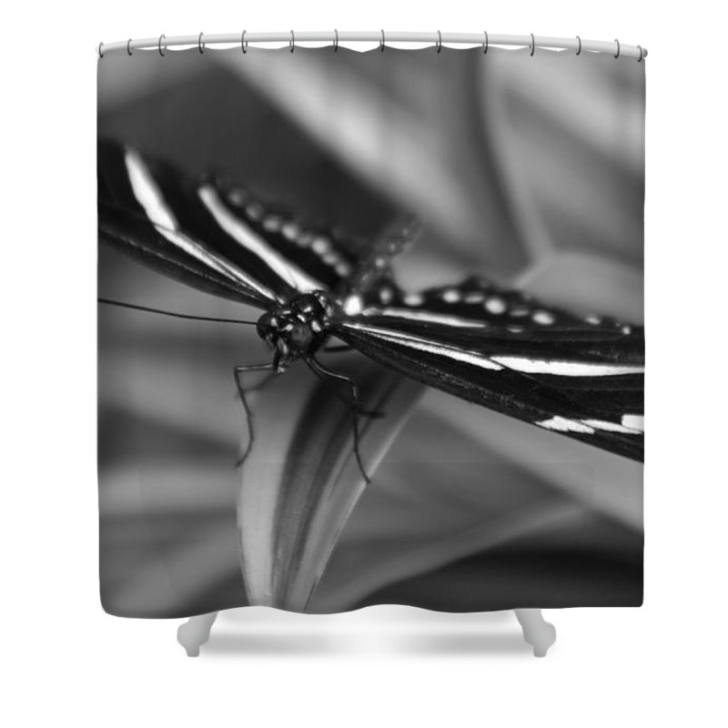Zebra Longwing Shower Curtain featuring the photograph Zebra Longwing by Mithayil Lee