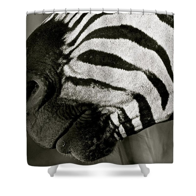 Zebra Shower Curtain featuring the photograph Zebra by Suzanne Morshead