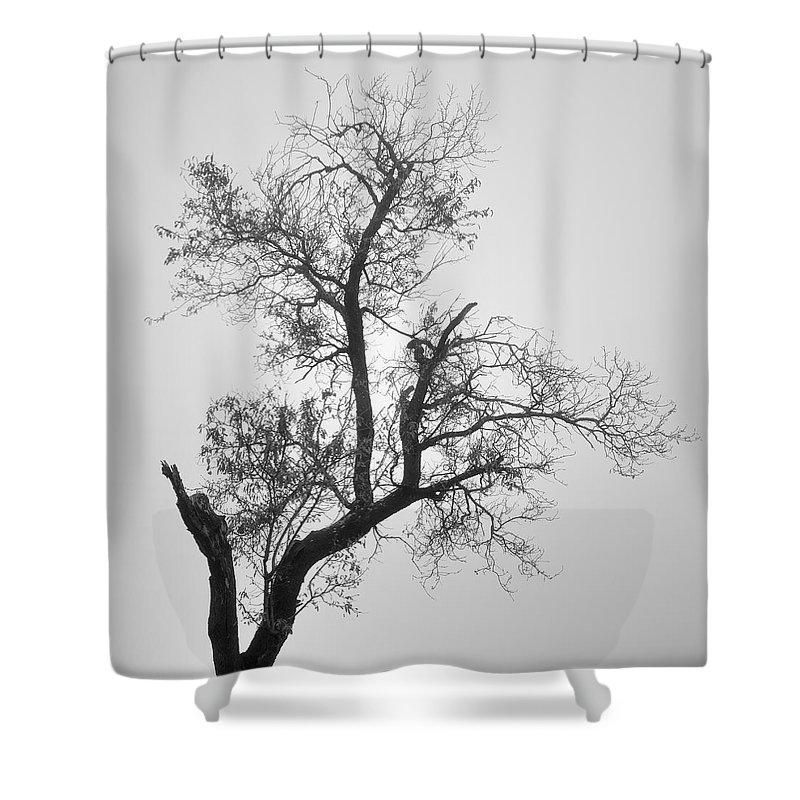 Zen Shower Curtain featuring the photograph Zen Tree by Guido Montanes Castillo
