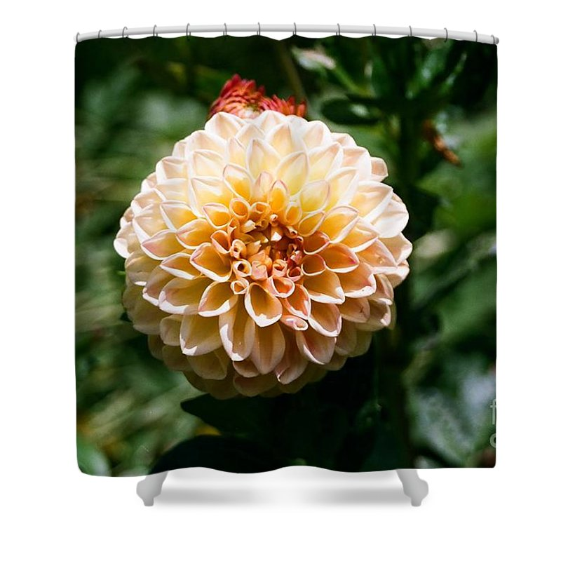 Zinnia Shower Curtain featuring the photograph Zinnia by Dean Triolo