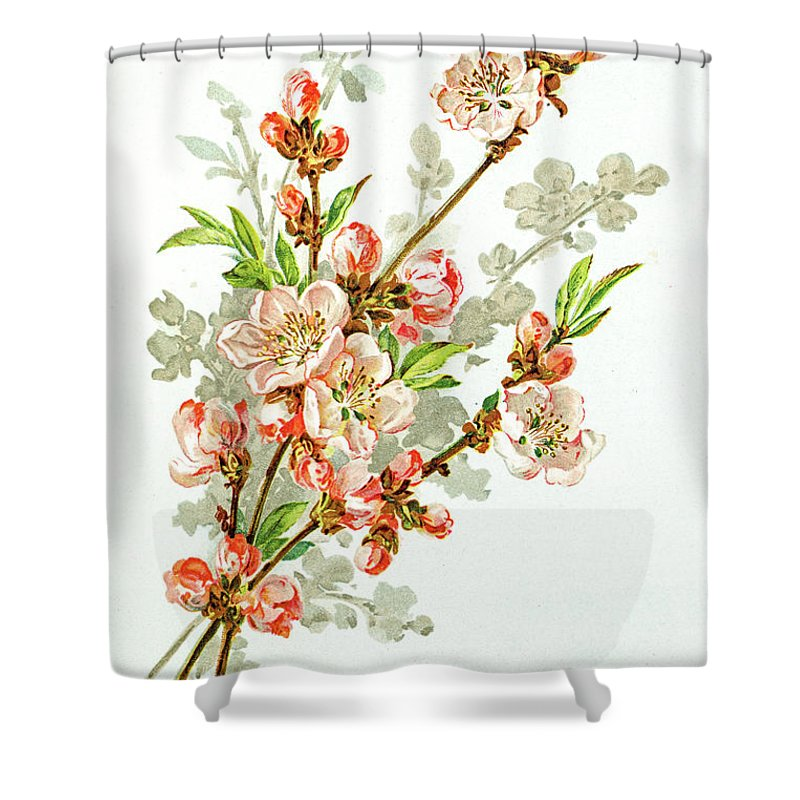 Cherry Shower Curtain featuring the digital art Apple Blossom 19 Century Illustration by Mashuk