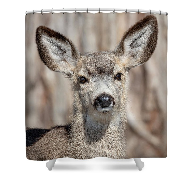 Doe Shower Curtain featuring the photograph Curious by Mike Dawson