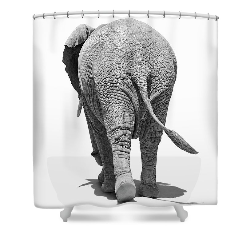 Shadow Shower Curtain featuring the photograph Elephants Behind by Burazin