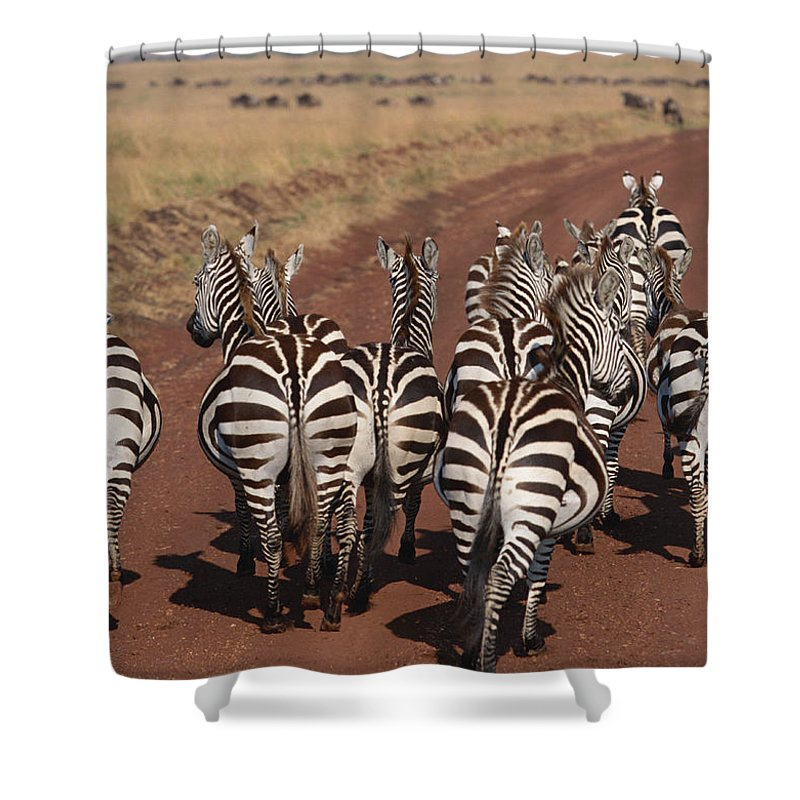 Plains Zebra Shower Curtain featuring the photograph Grant Zebra by Imagenavi