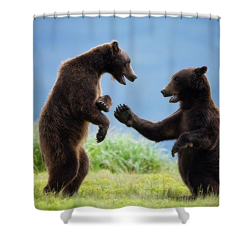 Brown Bear Shower Curtain featuring the photograph Grizzly Bears, Katmai National Park by Paul Souders