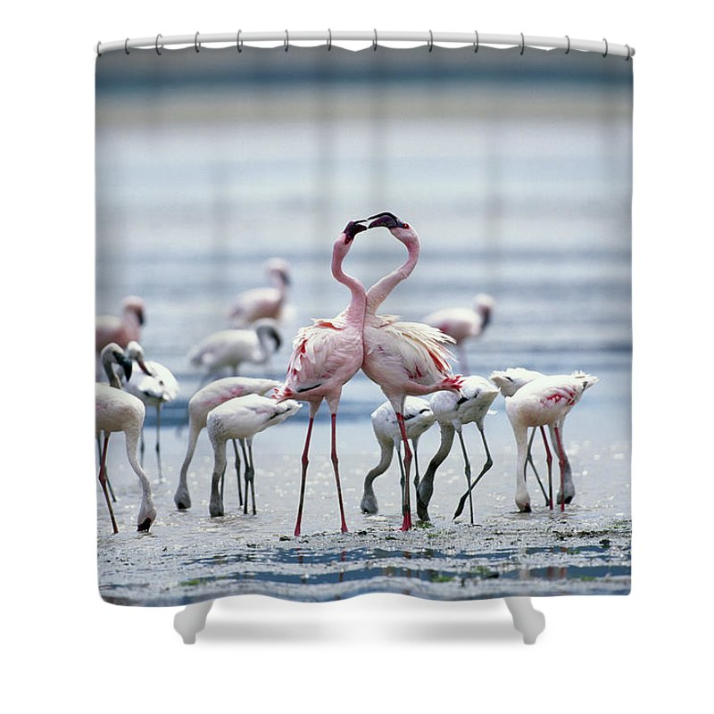 Tanzania Shower Curtain featuring the photograph Lesser Flamingoes Phoeniconaias Minor by Paul Souders