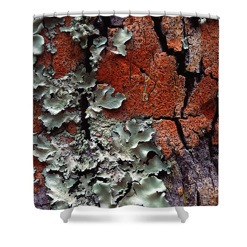 Built Structure Shower Curtain featuring the photograph Lichen On Tree Bark by John Foxx