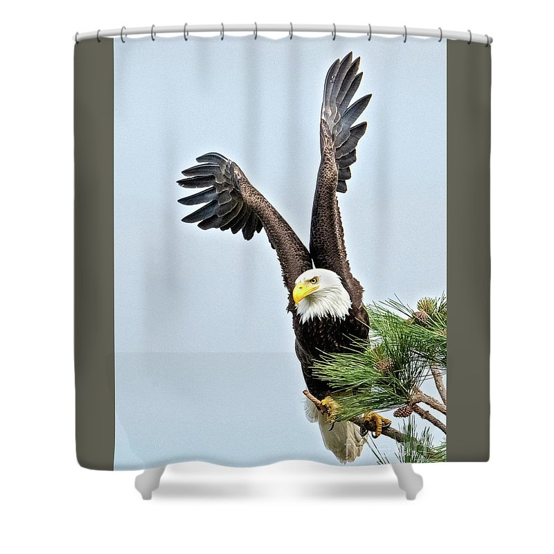Eagle Shower Curtain featuring the photograph Lifted Wings 1 by Mike Dawson