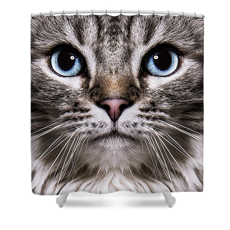 Pets Shower Curtain featuring the photograph Neva Masquerade Cat In The Studio by Kevin Vandenberghe