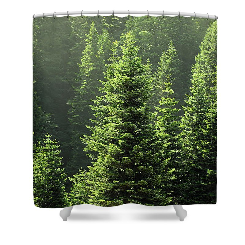 Scenics Shower Curtain featuring the photograph Pine Tree by Petekarici