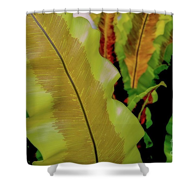 Plants Shower Curtain featuring the photograph Plants And Leaves Hawaii by D Davila