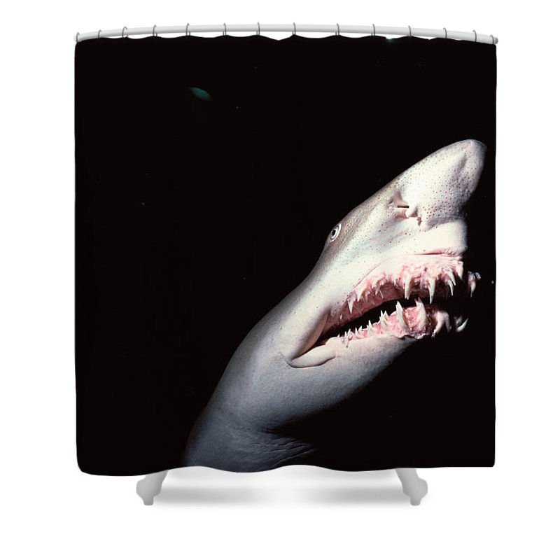 Underwater Shower Curtain featuring the photograph Sand Tiger Shark by Jeff Rotman