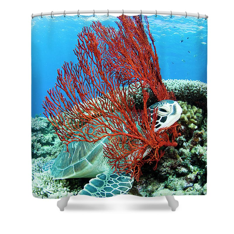 Underwater Shower Curtain featuring the photograph Sea Turtle Resting Underwater by Yusuke Okada/a.collectionrf