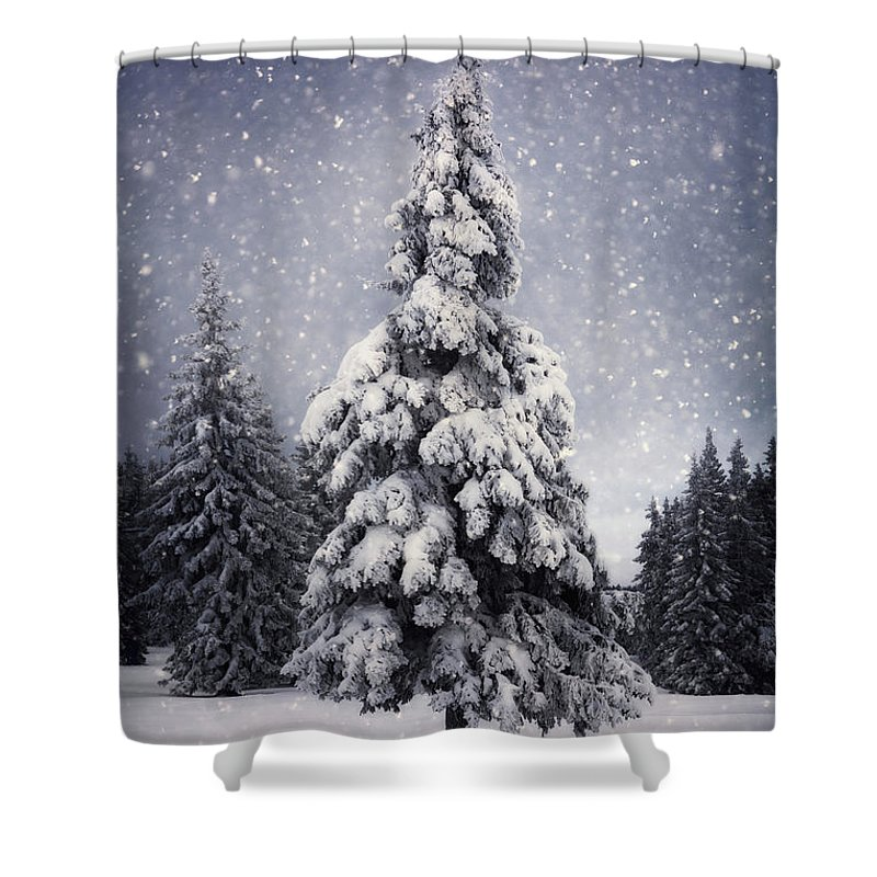 Scenics Shower Curtain featuring the photograph Winter Tree by Borchee